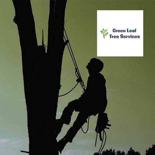 Tree surgeon website design