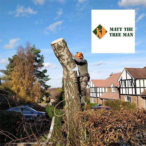 Tree surgeon website design and SEO