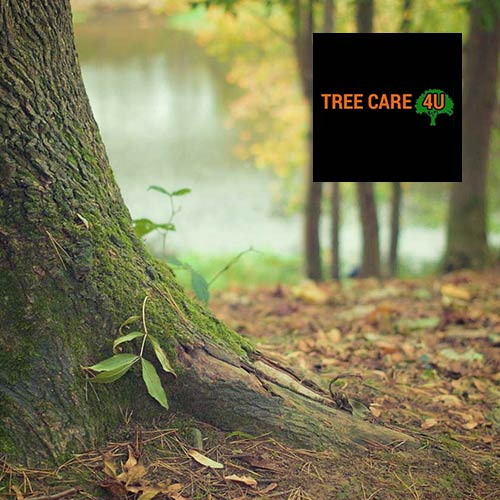 Tree care website design